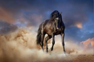 http://www.allposters.com/-sp/Black-Stallion-Horse-Posters_i13435492_.htm